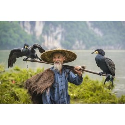 Photographic Print: Cormorant Fisherman and His Birds on the Li River in Yangshuo, Guangxi, China. by SeanPavonePhoto: 24x16in