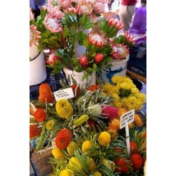 Photographic Print: Native South African Flowers for Sale in the Neighbourgoods Market by Krista Rossow: 24x16in
