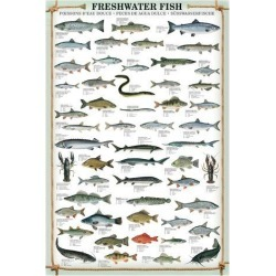 Art Print: Freshwater Fish: 56x44in found on Bargain Bro India from Art.com for $67.00
