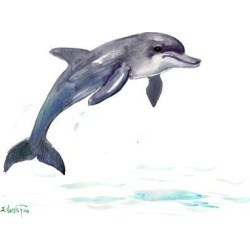 Art Print: Dolphin 2 by Suren Nersisyan: 12x16in found on Bargain Bro from Art.com for USD $15.20