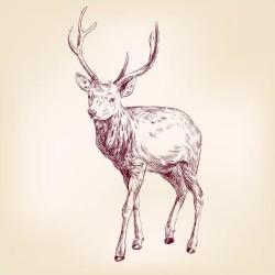 Art Print: Deer Hand Drawn Vector Llustration Realistic Sketch by VladisChern: 12x12in