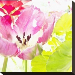 Stretched Canvas Print: Pink Parrot Tulip Canvas Art by Judy Stalus: 11x11in found on Bargain Bro from Art.com for USD $72.20