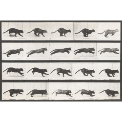 Stretched Canvas Print: Cat Galloping by Eadweard Muybridge: 32x48in found on Bargain Bro India from Art.com for $320.00