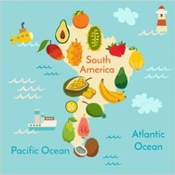 Art Print: Fruit World Map South America by coffeee in: 24x16in