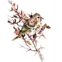 Stretched Canvas Print: Pine Siskin by Suren Nersisyan: 48x36in found on Bargain Bro India from Art.com for $160.00
