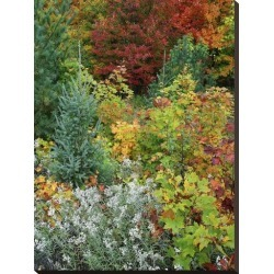 Stretched Canvas Print: Autumn colors, Killarney Provincial Park, Ontario, Canada by Tim Fitzharris: 32x24in found on Bargain Bro India from Art.com for $95.00
