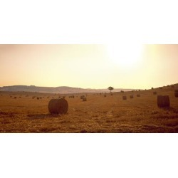 Photographic Print: Hay Bales in a Field, Pienza, Siena Province, Tuscany, Italy: 48x24in