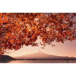 Photographic Print: Sunset at Mountain Fuji and Red Maple Tree in Japan Autumn Season by ommaphat chotirat: 24x16in