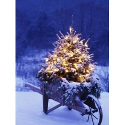 Photographic Print: Lighted Christmas Tree in Wheelbarrow Poster by Jim Craigmyle: 24x18in found on Bargain Bro India from Art.com for $25.00