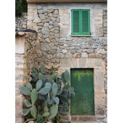 Photographic Print: Opuntia Cactus and Green Door Poster by Holger Leue: 12x9in found on Bargain Bro Philippines from Art.com for $18.00