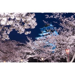Photographic Print: Osaka, Japan at Osaka Castle Park in the Springtime. by SeanPavonePhoto: 24x16in
