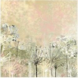 Premium Giclee Print: Cow Parsley softness by Claire Westwood: 18x24in