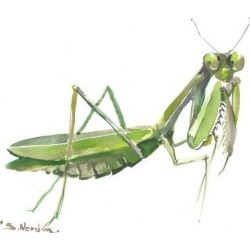 Giclee Print: Praying Mantis by Suren Nersisyan: 24x32in found on Bargain Bro Philippines from Art.com for $70.00