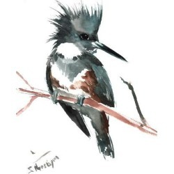 Art Print: Belted Kingfisher by Suren Nersisyan: 16x12in found on Bargain Bro from Art.com for USD $15.20