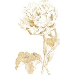 Art Print: Gilded Botanical VII by Wild Apple Portfolio: 24x18in