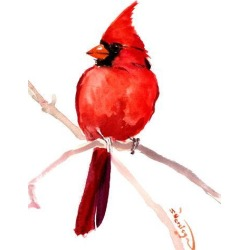 Giclee Print: Cardinal Bird 2 by Suren Nersisyan: 24x18in found on Bargain Bro India from Art.com for $40.00