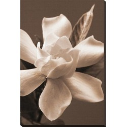 Stretched Canvas Print: Magnolia in Sepia by Christine Zalewski: 29x20in found on Bargain Bro India from Art.com for $122.00