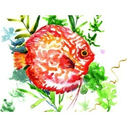 Giclee Print: Discus Fish 3 by Suren Nersisyan: 18x24in found on Bargain Bro Philippines from Art.com for $40.00