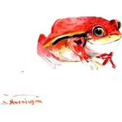 Giclee Print: Tomato Frog by Suren Nersisyan: 30x40in found on Bargain Bro Philippines from Art.com for $70.00