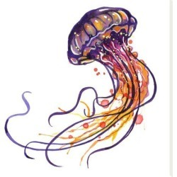 Stretched Canvas Print: Jellyfish by Sam Nagel: 18x18in found on Bargain Bro India from Art.com for $85.00