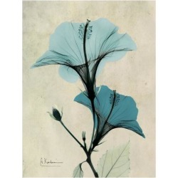 Premium Giclee Print: Hibiscus Moments by Albert Koetsier: 24x18in