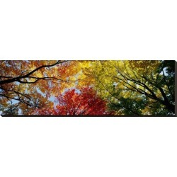 Stretched Canvas Print: Colorful Trees in Fall, Autumn, Low Angle View: 12x36in found on Bargain Bro Philippines from Art.com for $115.00