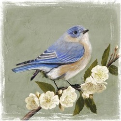 Art Print: Bluebird Branch I by Victoria Borges: 16x16in found on Bargain Bro Philippines from Art.com for $15.00