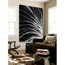 Loft Art: White Feather by Incado None: 54x72in