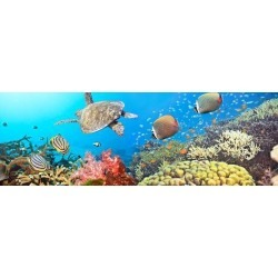 Photographic Print: Underwater Panorama by GoodOlga: 42x14in
