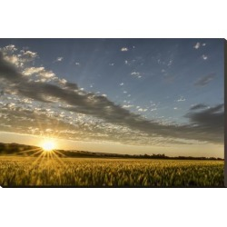 Stretched Canvas Print: Sunset Over the Golden Meadow by Don Schwartz: 29x44in found on Bargain Bro India from Art.com for $235.00