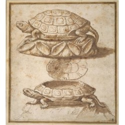 Giclee Print: Design for a Lidded Box in the Shape of a Tortoise, Shown Open and Shut by Giulio Romano: 24x24in found on Bargain Bro India from Art.com for $30.00