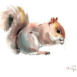 Giclee Print: Squirrell 1 by Suren Nersisyan: 36x48in found on Bargain Bro Philippines from Art.com for $135.00