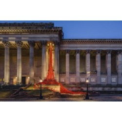 Photographic Print: The Poppies Weeping Window sculpture cascading down the St. George's Hall building in Liverpool, Me by Garry Ridsdale: 36x24in