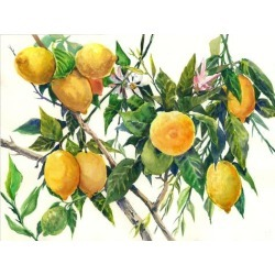 Giclee Print: Lemons On The Tree 2 by Suren Nersisyan: 18x24in found on Bargain Bro Philippines from Art.com for $64.99