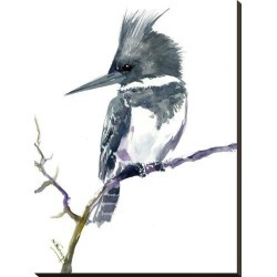 Stretched Canvas Print: Belted Kingfisher 1 by Suren Nersisyan: 32x24in found on Bargain Bro from Art.com for USD $87.40