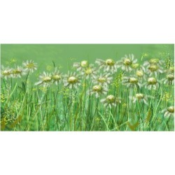 Premium Giclee Print: Fresh Daisies by Claire Westwood: 12x16in