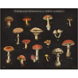 Art Print: Mushroom Chart I by Wild Apple Portfolio: 24x18in