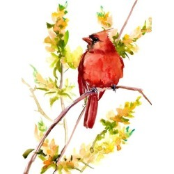 Giclee Print: Cardinal Bird 3 by Suren Nersisyan: 48x36in found on Bargain Bro India from Art.com for $135.00