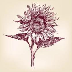 Art Print: Sunflower Hand Drawn Vector Llustration Realistic Sketch by VladisChern: 12x12in