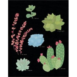 Art Print: Succulent Chart IV by Wild Apple Portfolio: 24x18in