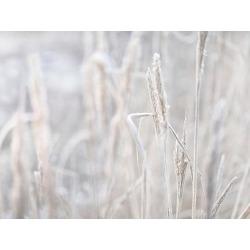 Art Print: Winter Grass by Lebens Art: 12x16in