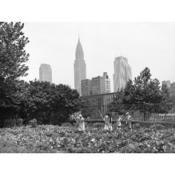 Photographic Print: 1943 Children Working in Victory Gardens in St. Gabriel's Park New York City Chrysler Building: 24x18in