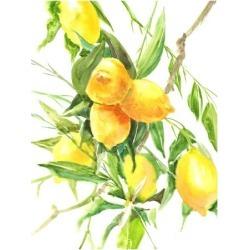 Art Print: Lemon Tree by Suren Nersisyan: 16x12in found on Bargain Bro from Art.com for USD $15.20