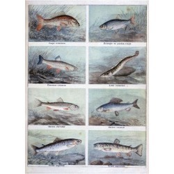 Giclee Print: Freshwater Fish, 1898 by F Meaulle: 24x18in found on Bargain Bro India from Art.com for $25.00