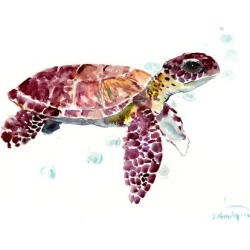 Art Print: Sea Turtle Cherry by Suren Nersisyan: 12x16in found on Bargain Bro India from Art.com for $20.00