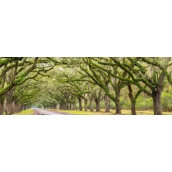 Photographic Print: USA, Georgia, Savannah, Entrance to Wormsloe Plantation by Jordan Banks: 42x14in