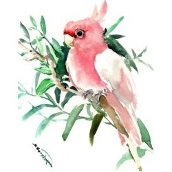 Art Print: Cockatoo 2 by Suren Nersisyan: 32x24in found on Bargain Bro India from Art.com for $32.00