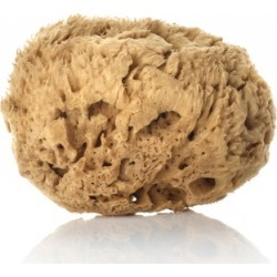 Huygens Natural Mediterranean Sea Sponge found on Makeup Collection from Harvey Nichols for GBP 21.83