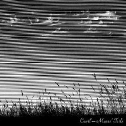 Mares Tails