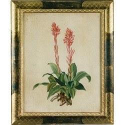 Bianchi Arte Designer Paintings, Oil on Canvas Botanical Painting found on Bargain Bro Philippines from FORZIERI  AU for $1165.85